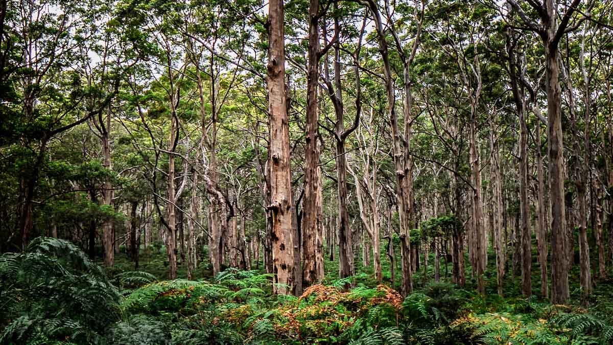 Landscape Fine Art Boranup Forest